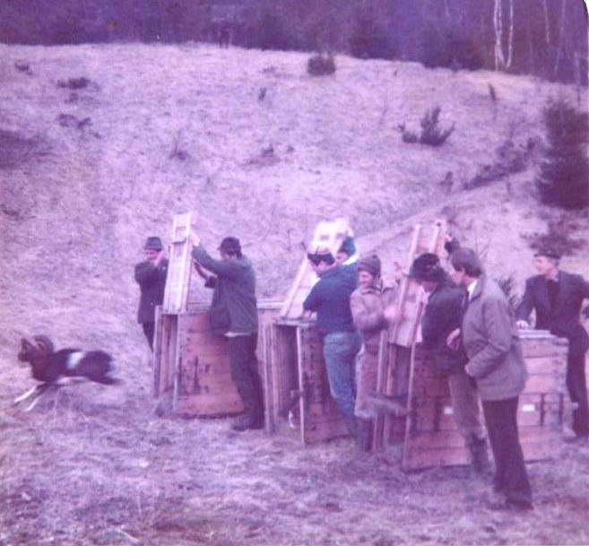 Muflon u Gorskom kotaru