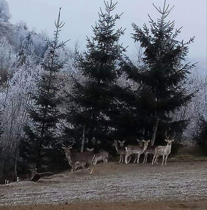 Natječaj za najbolju fotografiju divljači u lovištima Primorsko-goranske županije u 2019. godini.