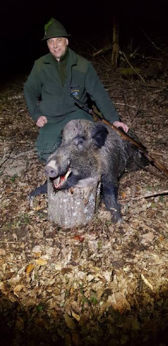 Odstrel divlje svinje