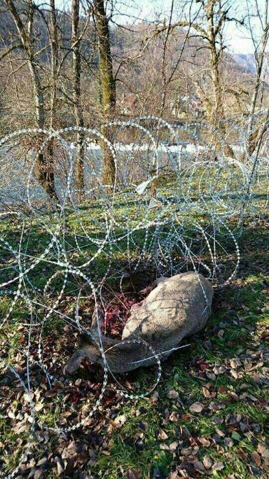 Prosvjed protiv postavljanja žilet-žice