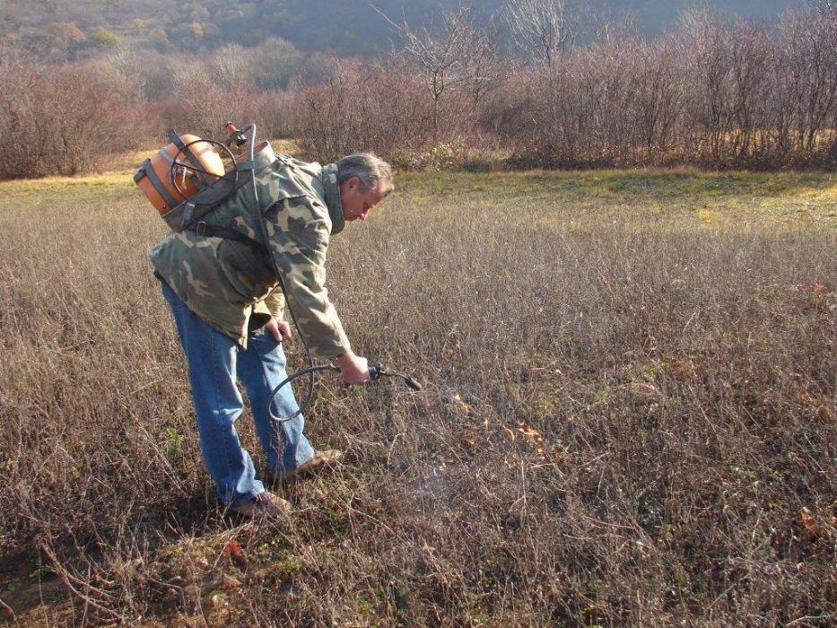 Ambrozija u našim lovištima