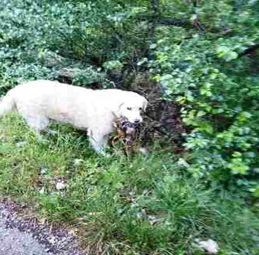 Psi bez nadzora lutaju mjestom i lovištem