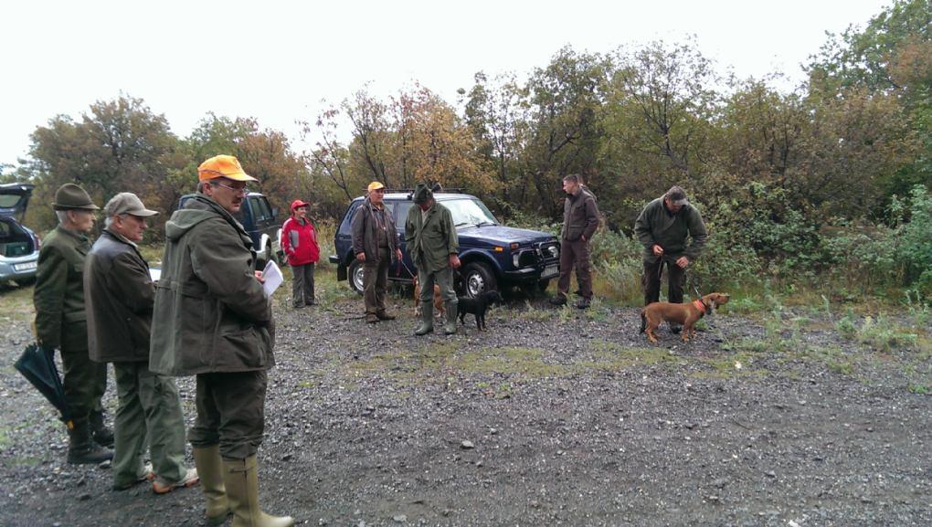 Županijsko natjecanje u radu pasa glasnog gona na divlju svinju u gateru